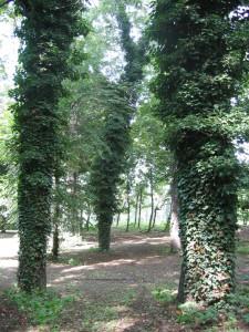 stromy les